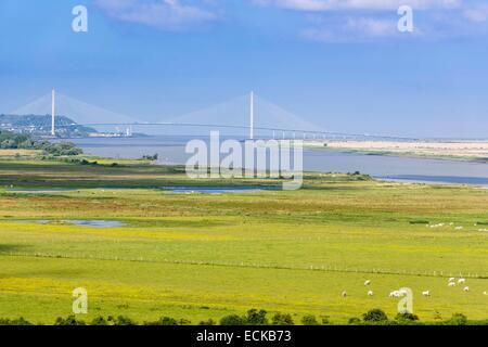France, Eure, Marais Vernier region, Norman Seine River Meanders Regional Nature Park, view over the Normandy Bridge - Stock Photo