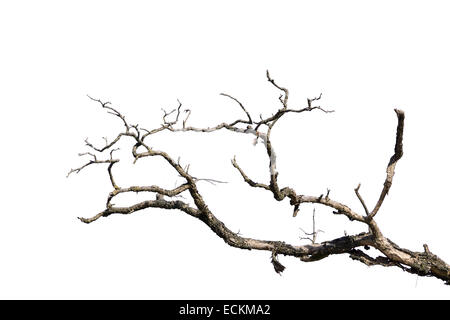 branch of dead tree,  isolated on white - Stock Photo