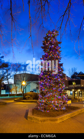 A very large Christmas Tree (Blue Spruce) covered in lights in downtown Oakville, Ontario, Canada. - Stock Photo