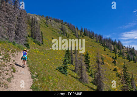 A HIKER walking near LOBO POINT, elevation 7060 feet,  on the Continental Divide - SOUTHERN COLORADO MR - Stock Photo