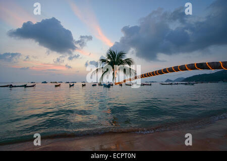 leaning coconut tree on Sairee Beach at sunset, Koh Tao, Thailand - Stock Photo