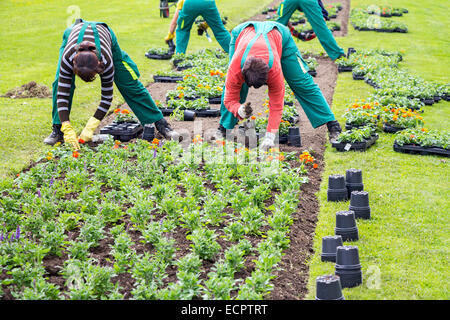 Women workers planted flowers into flower beds in in city park - Stock Photo