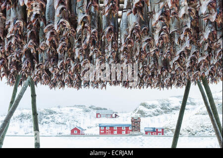 Stockfish hanging in front of a building in winter - Stock Photo