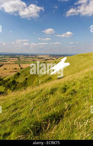 The Westbury White Horse Chalk Hill figure, on the edge of Salisbury Plain, Wiltshire, United Kingdom. - Stock Photo