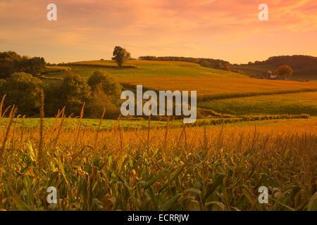 RIPE CORN STALKS CORNFIELD BROOKVILLE JEFFERSON COUNTY PENNSYLVANIA USA - Stock Photo