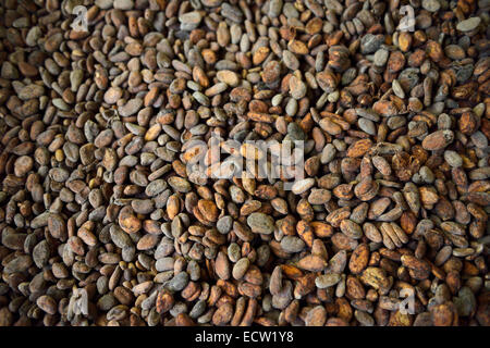 Fermented dried cacao beans for chocolate harvested in Dominican Republic - Stock Photo