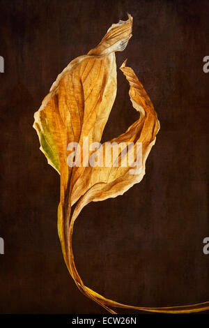 Hosta Leaves with textured background - Stock Photo