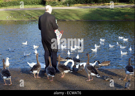 Man feeding geese and swans in Regents Park, London - Stock Photo