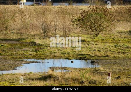Waste ground next to the mouth of the River Kelvin in Glasgow Scotland. Opposite the Riverside Museum. - Stock Photo