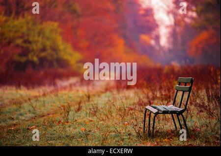 activity, autumn, background, beach, beautiful, beauty, bench, birch, bush, day, fall, forest, - Stock Photo