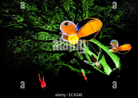 Colorful paper lanterns, depicting tropical flying insects, are hung on a greenly illuminated tree during the annual - Stock Photo