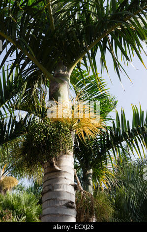 Gran canaria the jardin botanico de viera y clavijo run - Jardin botanico las palmas ...