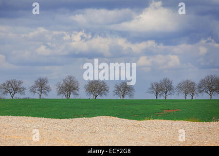 spring landscape with the trees - Stock Photo