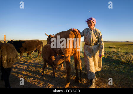 Mongolian nomad women milking cows on the steppe, Mongolia - Stock Photo