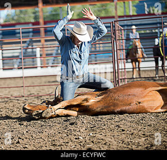 Caucasian cowboy tying cattle in rodeo on ranch