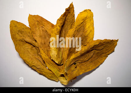 Oriental tobacco leaves - Stock Photo