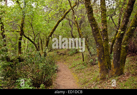 CA02615-00...CALIFORNIA -  The Monroe Ridge Trail in the Marshall Gold Discovery State Historic Park. - Stock Photo