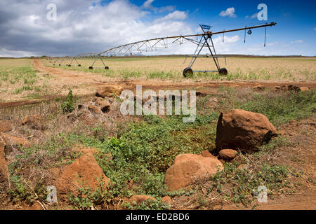 Mauritius, Albion, agriculture, Valley linear crop irrigation machine in newly planted sugar cane field - Stock Photo