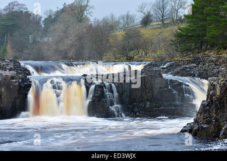 Bowlees, Middleton in Teesdale, County Durham. 26th December 2014. Low Force Waterfall on Boxing Day. Credit:  Robert - Stock Photo