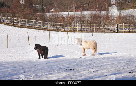 English winter Landscape with Ponies grazing in a snow covered field - Stock Photo