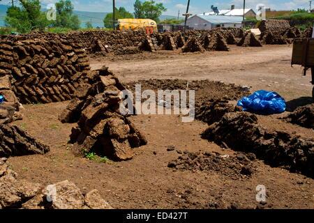 Drying manure for fuel In the remote village of Gulyuzu, by Cildir Golu Lake, far eastern Turkey - Stock Photo
