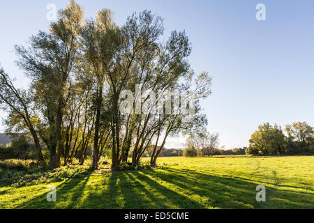 Trees casting shadows on Castle Meadows, Abergavenny, Wales, UK - Stock Photo