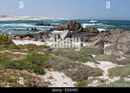 Tsaarsbank Postberg Section West Coast National Park Western Cape - Stock Photo