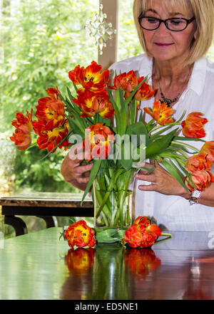 Mature adult caucasian woman arranging a vase of flowers or tulips in a bright home with windows. - Stock Photo