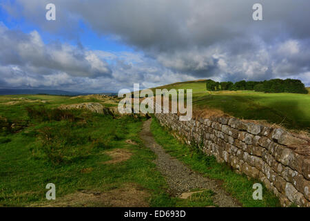 An early morning start at Hadrians Wall 1 mile from Once Brewed in the Northumberland National Park. - Stock Photo