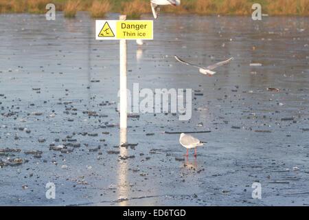 Wimbledon, London, UK. 30th December, 2014. UK weather.  Seagulls on a frozen lake on Wimbledon Common Credit:  - Stock Photo