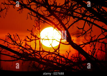 The sun rising through trees in Wanstead, East London - Stock Photo