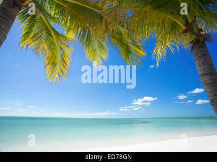 Palm trees on tropical beach in Abaco, Bahamas - Stock Photo