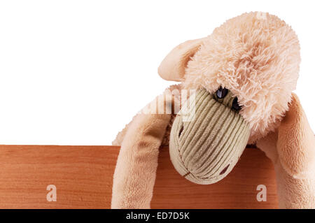 toy sheep - Stock Photo