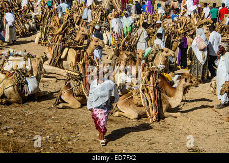 Camels loaded with firewood on the Monday market of Keren, Eritrea - Stock Photo