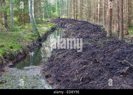 New digging drainage ditches in the woods - Stock Photo