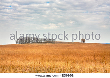 A landscape view of a tree standing alone near a grove of trees in a field of grass near the Tallgrass Prairie Preserve - Stock Photo