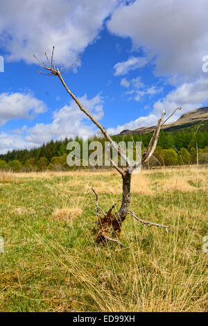 The superb scenery looking down Glen Orchy in the Highlands of Scotland - Stock Photo