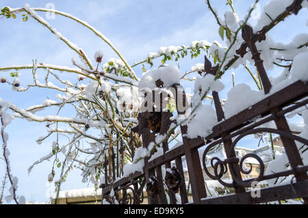 Snow cover rusty old fence closeup view - Stock Photo