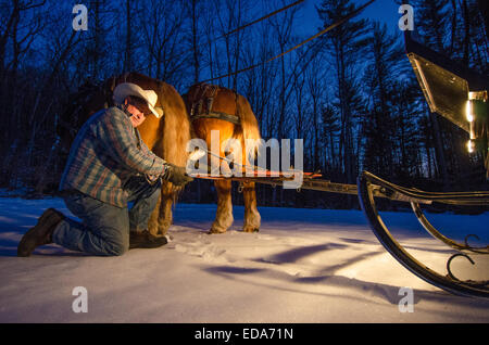 A cowboy prepares a horse drawn sleigh ride in the forests of New Hampshire. - Stock Photo