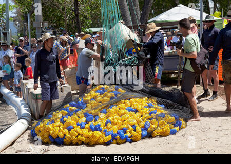 Rotary club is starting the duck race in Palm Cove Australia - Stock Photo