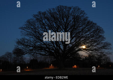 Moon rising behind a winter leafless common oak tree on a field one dark Nordic January evening. Cycle track lamps - Stock Photo