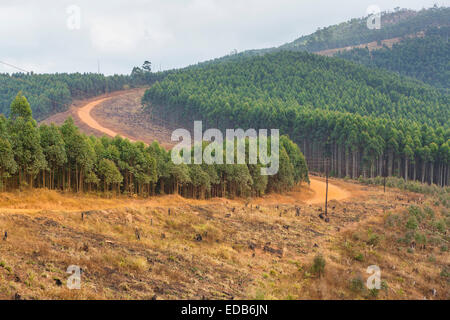 SWAZILAND, AFRICA - Timber industry in Hhohho District - Stock Photo