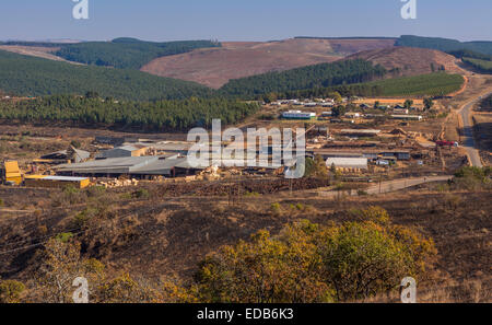 HHOHHO, SWAZILAND, AFRICA - Sawmill and tree plantation near town of Piggs Peak. - Stock Photo