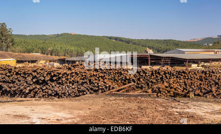 HHOHHO, SWAZILAND, AFRICA - Pile of logs at sawmill and tree plantation near town of Piggs Peak. - Stock Photo