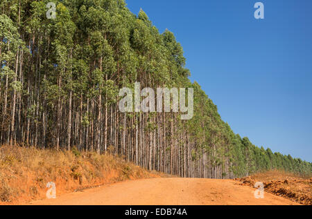 HHOHHO, SWAZILAND, AFRICA - Timber industry landscape, trees and road. - Stock Photo