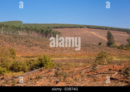HHOHHO, SWAZILAND, AFRICA - Timber industry landscape, trees and clearcut. - Stock Photo