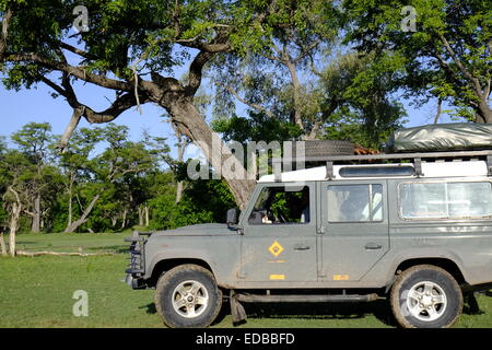 Tourists on safari watch a leopard (Panthera pardus) lying in a tree at a sighting at Paradise Pools Botswana. - Stock Photo