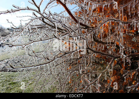 Fantastic photographic detail Closeup of frozen trees and leaves during the winter near Canada's Niagara Falls - Stock Photo