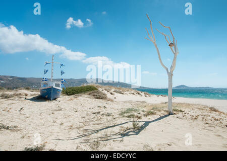 White tree with an attached shell on a beach on Naxos, Greek Islands - Stock Photo