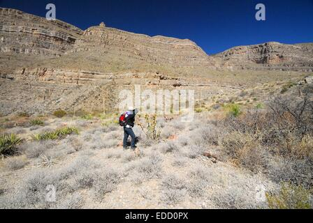 My 78 year old sister taking a picture of cacti  in Oliver Lee State Park New Mexico - USA - Stock Photo